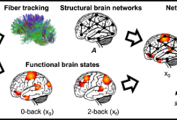 Nature Communications:多巴胺调节工作记忆期间的脑网络动态,且在精神分裂症患者中减弱
