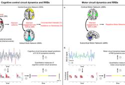Nature Communications:认知控制和运动回路的异常动力学预示着自闭症儿童独特的限制性和重复性行为