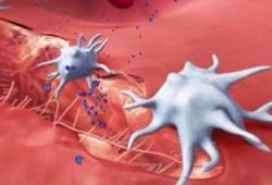 Blood:获得性血小板GPVI受体功能障碍提示早期败血症!