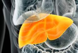 ClinGastroenterologyH:睾酮水平与NAFLD女性患者的肝炎和纤维化发展相关有关