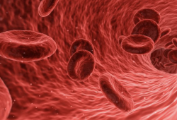 II期BEYOND研究结果公布:罗特西普可改善成人非输血依赖性(NTD)β-地中海贫血生活质量
