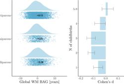 Human Brain Mapping:生育史与中年及老年女性的脑白质年龄有关