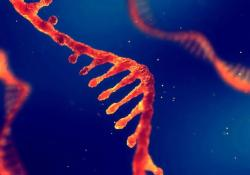 npj Vaccines:mRNA疫苗再获新突破,可对疟疾产生全面保护