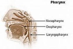 Eur Arch Otorhinolaryngol:人工耳蝸植入前后深度語后聽力損失成人的健康相關生活質量