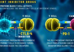 "Cell:<font color=""red"">肿瘤</font><font color=""red"">免疫</font>疗法会自我限制其疗效,通过激活Treg细胞,降低<font color=""red"">免疫</font>治疗效果"