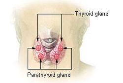 甲状腺功能减退症基层合理用药指南