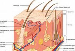 甲氨蝶呤治疗免疫相关性皮肤病专家共识