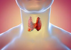 "Br J Cancer:安罗替尼通过靶向<font color=""red"">EGFR</font>抑制未分化甲状腺癌的血管生成作用"