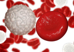 "Cell Death Differ:MLKL介导G-CSF的释放促进<font color=""red"">急性</font><font color=""red"">髓</font><font color=""red"">系</font><font color=""red"">白血</font><font color=""red"">病</font>中的<font color=""red"">髓</font><font color=""red"">系</font>分化"