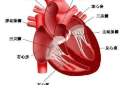 """Eur Heart J:氟喹诺酮类<font color=""""red"""">抗生</font><font color=""""red"""">素</font>可增加瓣膜反流率?"""