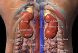 JCEM:肾上腺腺瘤患者的心脏代谢结局和死亡率