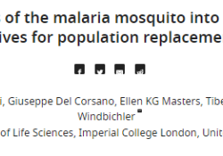 "eLife:改造蚊子基因是否阻止<font color=""red"">传播</font>疟疾"