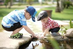 Gut Microbes:拟杆菌属含量高的男孩具有更好的认知和语言技能!