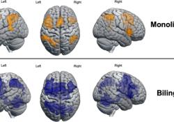 HBP:多学一门外语不影响大脑算术活动