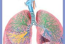 Thorax:外周血白细胞端粒长度与系统性硬化症间质性肺病进展相关