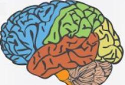 Brain:200多万人数据提示,重复的脑外伤居然会增加癫痫风险!