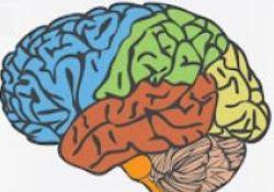 "Brain:200多万人数据提示,重复的脑外伤居然会增加癫痫<font color=""red"">风险</font>!"