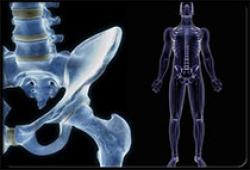 JCEM:血清甘氨酸水平与男性皮质骨特性和骨折风险相关