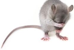 Molecular Psychiatry:在小鼠中,科学家成功逆转与年龄相关的记忆丧失!