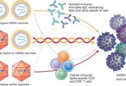 SARS-CoV-2疫苗混和接種可能更有效
