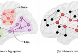 HUMAN BRAIN MAPPING:基于脑电图和DTI的FC、结构连接测量有助于对创伤性脑损伤姿势控制机制的研究