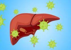 DigDisSci:肥胖和糖尿病均可影响丙型肝炎患者直接抗病毒治疗后的效果