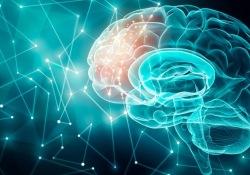 """JNNP-额叶痴呆患者,大脑中<font color=""""red"""">tau</font>蛋白不均匀分布"""