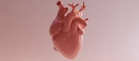 最新研究对肥厚型心肌病理解实现新飞跃