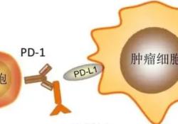 """Lancet Oncol:以<font color=""""red"""">PD</font>-1/<font color=""""red"""">PD</font>-L1抑制剂为基础的不同联合方案的不良事件发生情况"""