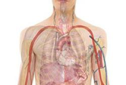 Eur Respir J:氨基葡萄糖与肺癌风险之间的关系