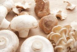 Advances in Nutrition:大规模研究表明:多吃蘑菇与癌症风险降低有关,尤其是乳腺癌