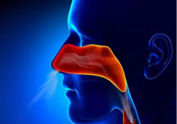 Nat Med:Toripalimab联合吉西他滨-顺铂化疗治疗晚期鼻咽癌的3期临床研究