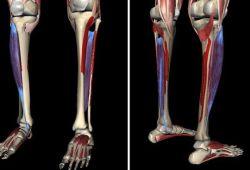 JNER:多发性硬化症、帕金森病患者和健康对照者的实验室步态特征与日常生活步态特征