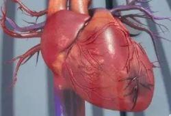 Circulation:再灌注治疗期间大剂量秋水仙碱是否可减小急性心肌梗死患者的梗死心肌面积?