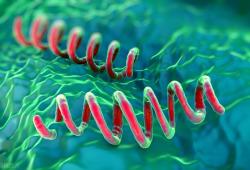 梅毒诊断和管理需要新的工具
