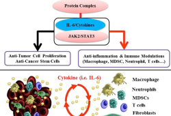 CSCO 2021:秦叔逵教授报告阿可拉定一线治疗基线较重预后较差晚期肝细胞癌结果