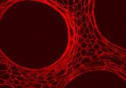 熵智科技震撼发布超分辨及共聚焦显微成像分析系统,国产高端生命科学仪器渐入佳境