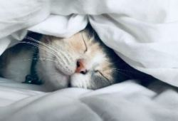 JAMA子刊:每晚睡多久能活更好?来看看来自亚洲四国的数据