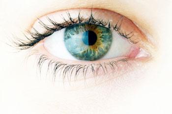 Cell Death Dis:Alcα缺失可导致视网膜神经节细胞损伤