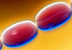 """欧盟批准Shionogi的新型抗生素Fetcroja——用于WHO指定的所有重点<font color=""""red"""">革兰氏</font>阴性病原体"""