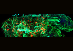 "Cell Discov:海藻提取物比<font color=""red"">瑞</font><font color=""red"">德</font><font color=""red"">西</font><font color=""red"">韦</font>更有效抑制SARS-CoV-2"