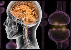 "Radiology:静息态功能MRI在<font color=""red"">胶质</font><font color=""red"">瘤</font>患者神经血管解偶联中的应用"