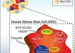 AACR:药物CLR1404能够检测和治疗恶性肿瘤和某些癌干细胞