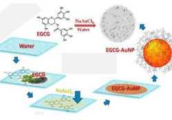 PNAS:纳米金结合茶叶化合物治疗前列腺癌效果显著