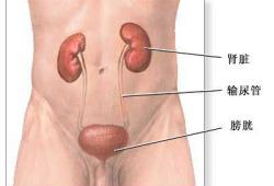 肾切除术-正常解剖、手术切口、手术指针、手术过程和手术预后(图片)