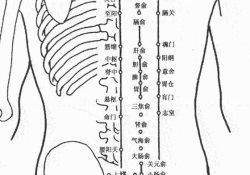 人体背部穴位图