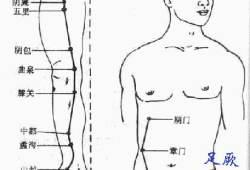 足厥阴肝经穴位图谱