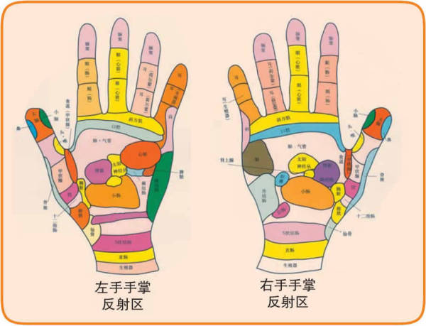 手掌反射区图