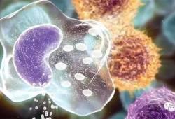 细胞的N种死亡方法----因为死亡才有重生!