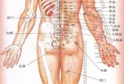 彩色高清版人体穴位图谱 (彩图版),含正面、背面和侧面